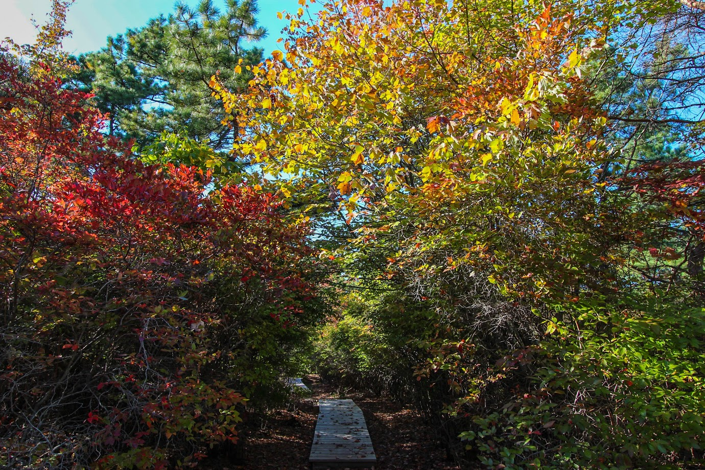 trail-autumn